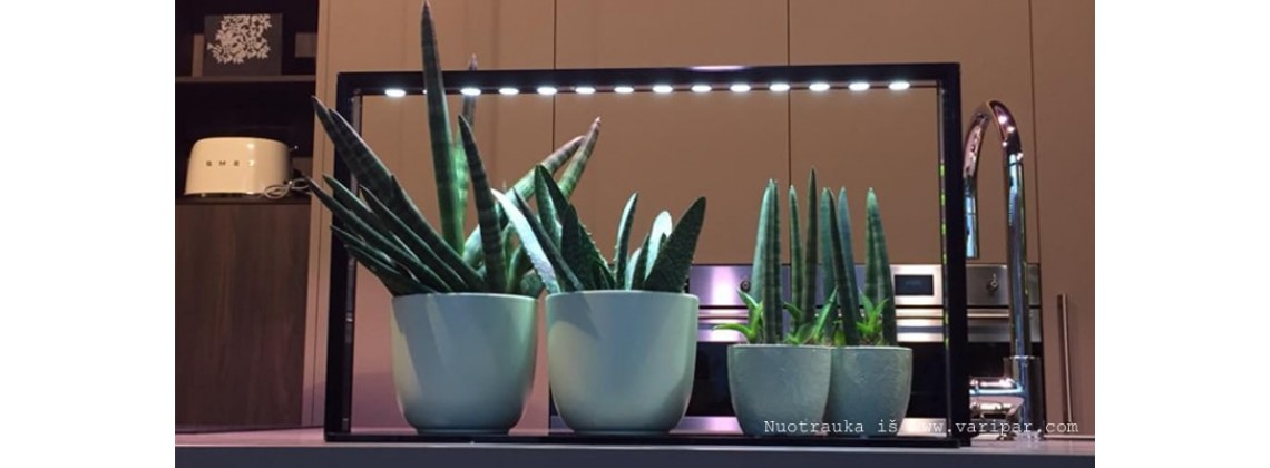 Augalų LED mini sodai EcoHerb